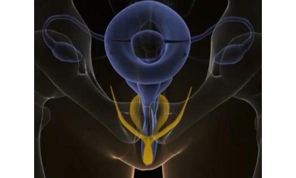 Clitoris 3D