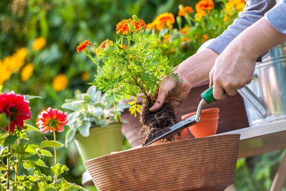 Domowy ogródek – jak nawozić rośliny doniczkowe? / fot. Shutterstock