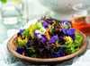 Sałata z letnich liści sałat i kwiatów z ostrym dressingiem (m)