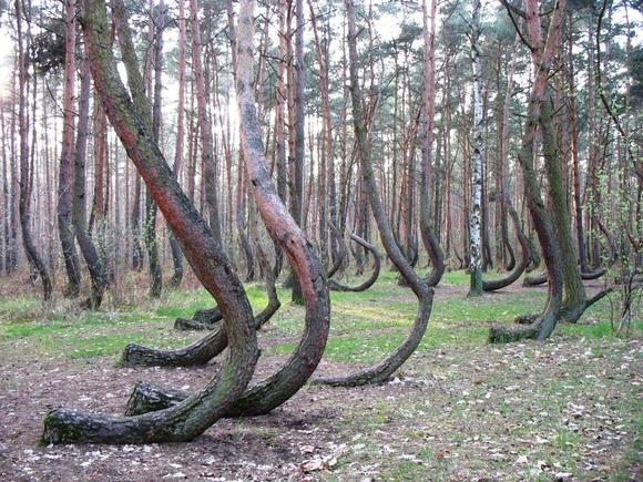 fot. www.gryfino.pl