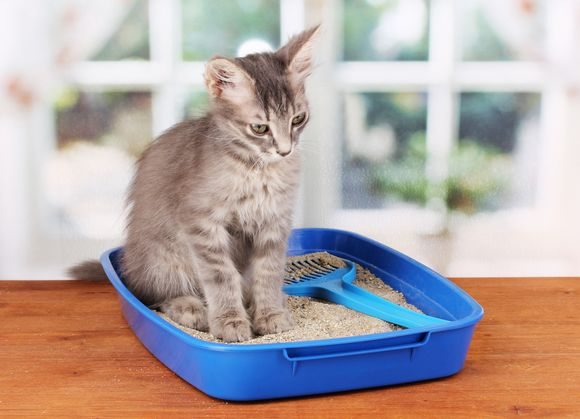 Cats Best EcoPlus