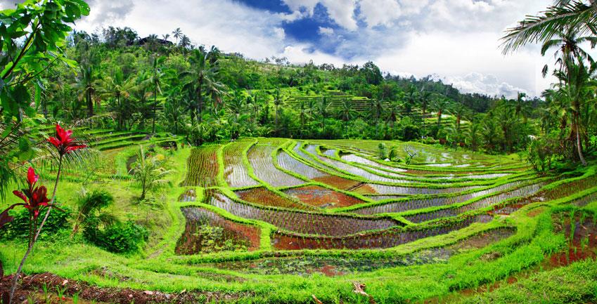 Wyprawa Kobieca na Bali, w programie wycieczka na pola ryżowe