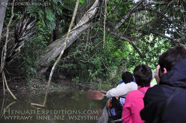 W poszukiwaniu Hoacynów, Amazonia, HenuatiExpeditions.com / fot. Dorota Polaczek
