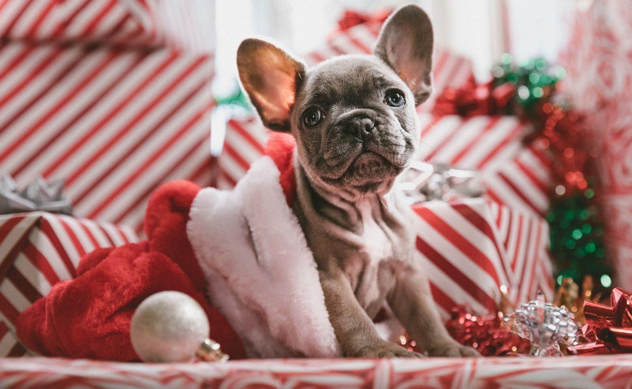 Dawanie prezentów – wszystko o czym warto pamiętać