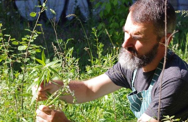 wojtasik badacz kultury rośliny dzikie eko