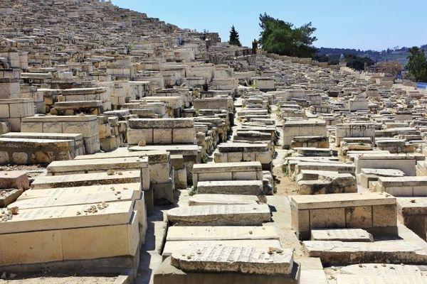Najsłynniejszy i największy cmentarz na świecie / fot. materiały prasowe