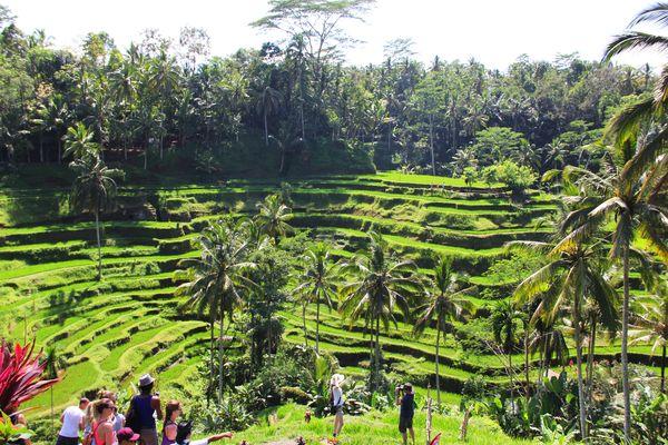 Tarasowe pola ryżowe w pobliżu Ubud / fot. Magda Lubowiecka