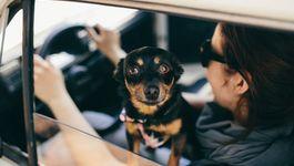 kaboompics-com_cute-little-dog-in-a-car-looking-through-window_b