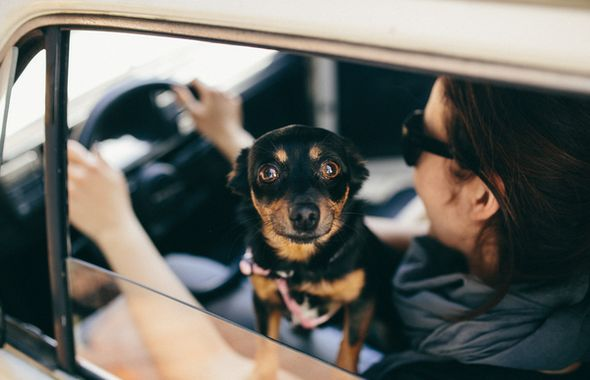 kaboompics-com_cute-little-dog-in-a-car-looking-through-window_rot