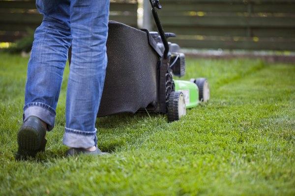 Pierwsze koszenie świeżo położonej trawy możemy wykonać, gdy źdźbła będą miały wysokość około 6 cm / fot. Fotolia