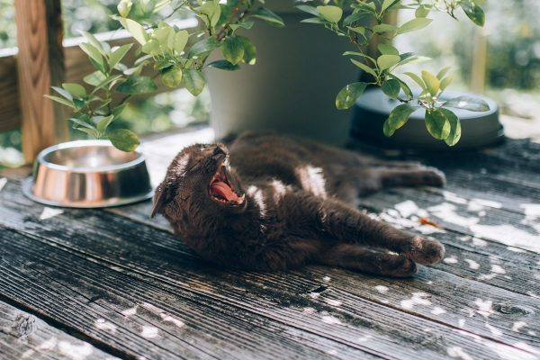 cynk dla kota, purina, karma kocia