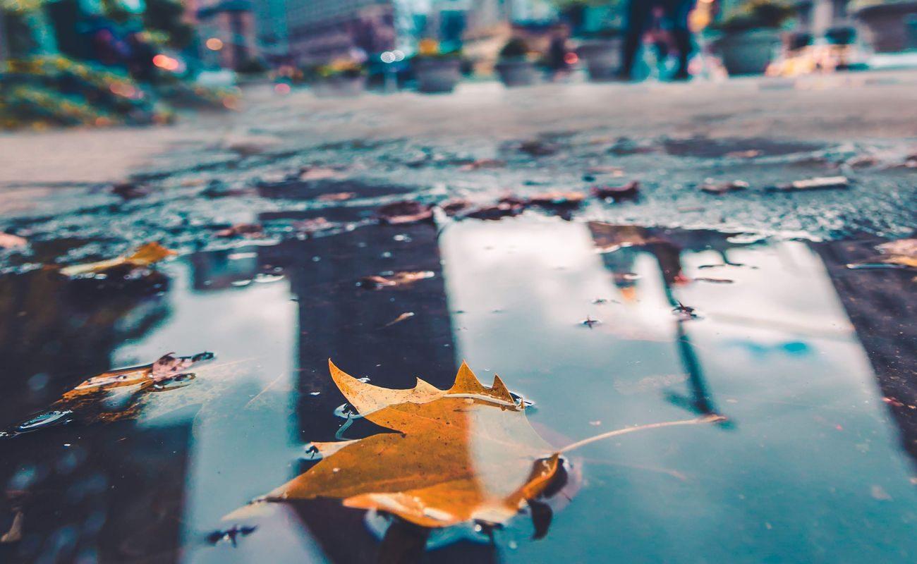 Jesienny liść utonął w kałuży