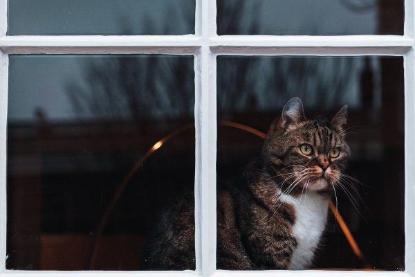kot obserwujący w oknie sąsiadów