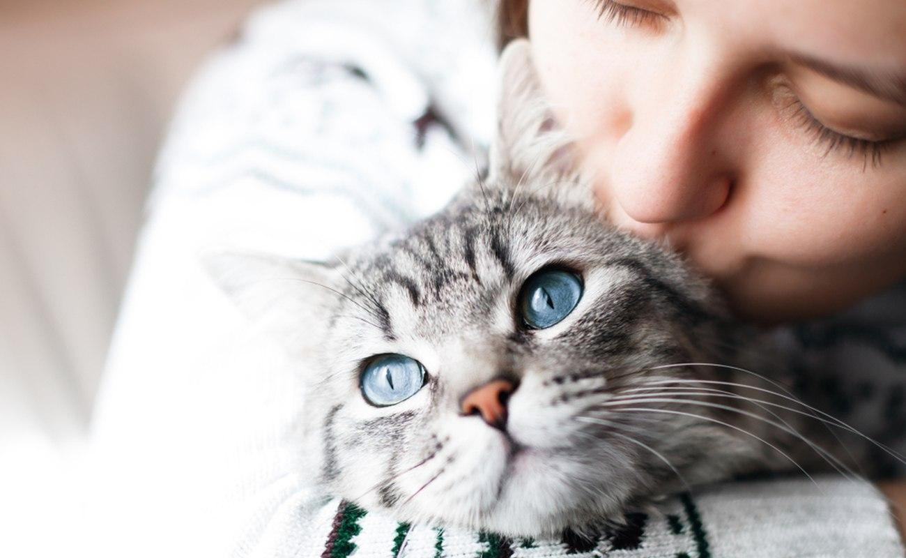 Czyszczenie uszu i oczu kota – jak często i w jaki sposób należy to robić?