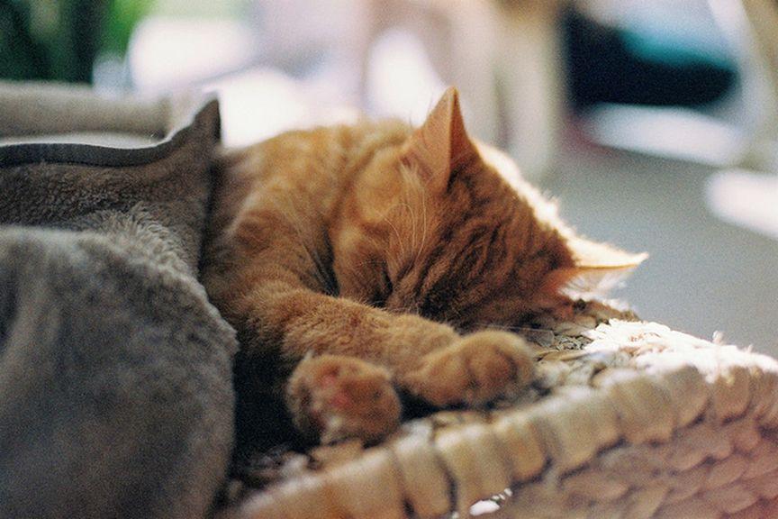 Kot robiący sobie drzemkę