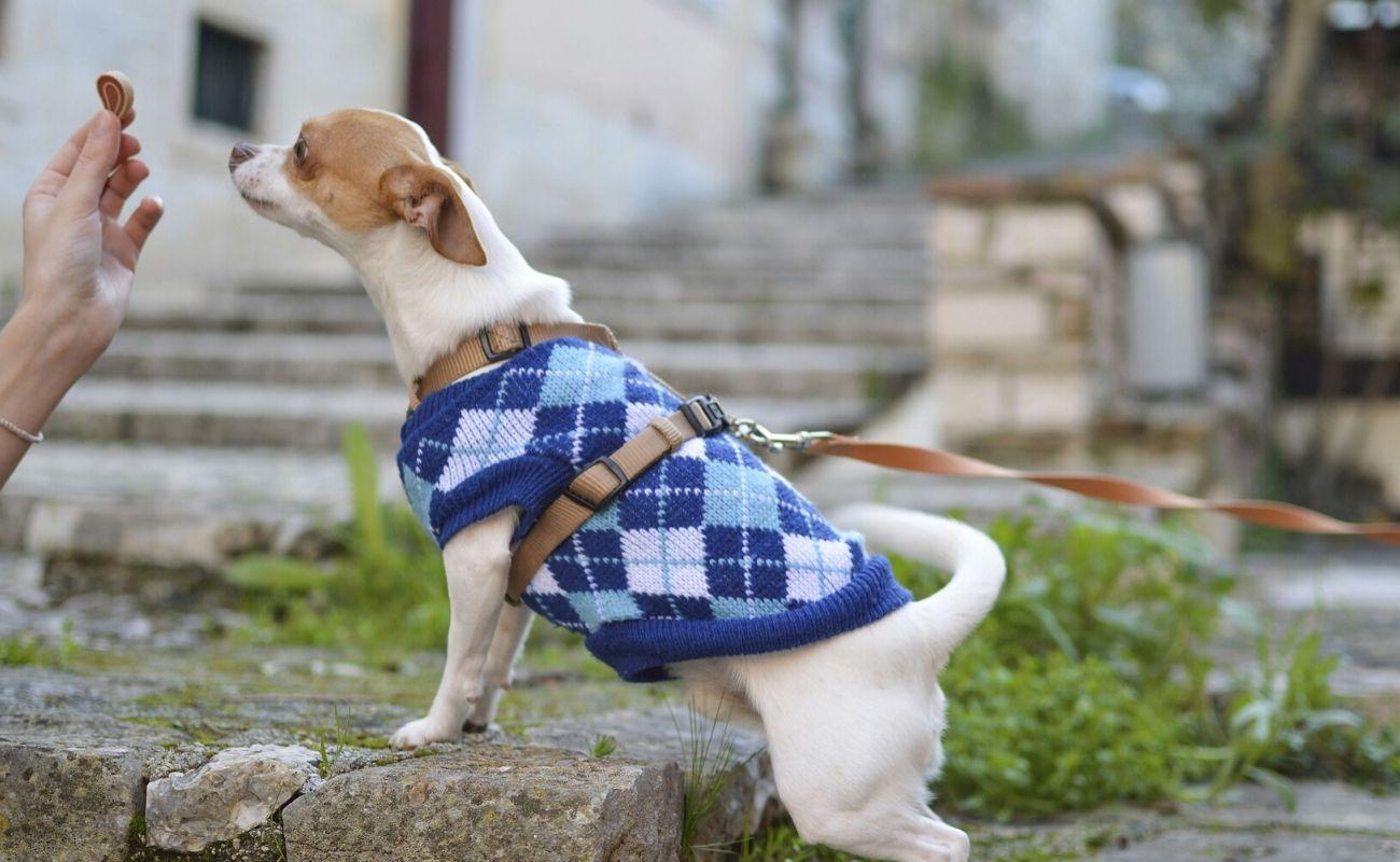 psia moda