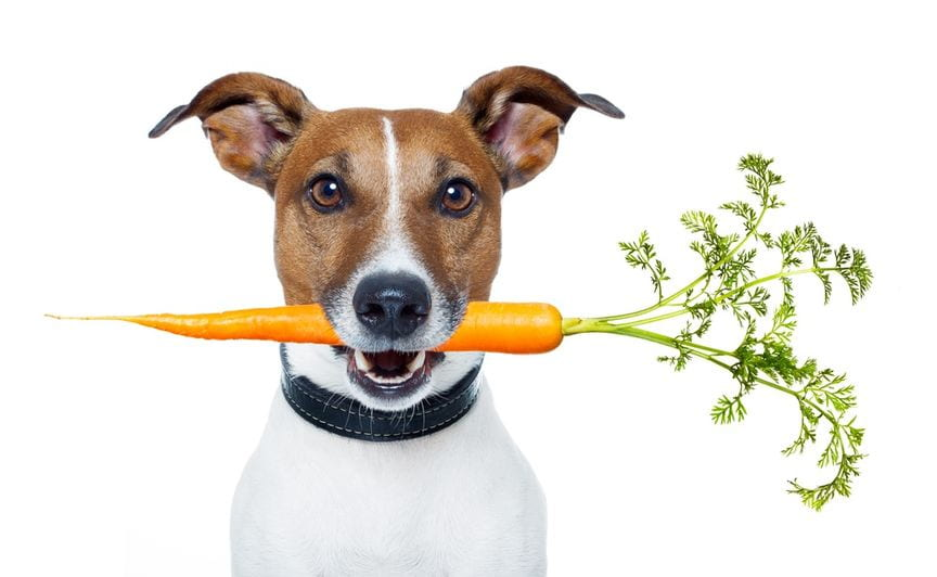 dieta-dla-psa-miasto-kobiet